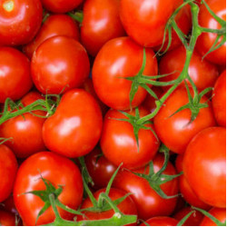 Tomatoes On The Vine  Class 1 Loose 400g